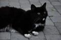 veikala Dukāta kaķis atnāca paciemoties